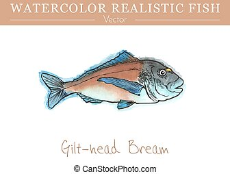 Hand painted watercolor edible fish. Vector design - Hand...