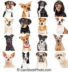 Multiple Crossbreed Dog Closeups - Collage of close-up...