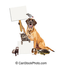 Domestic Pet Group With Blank Signs