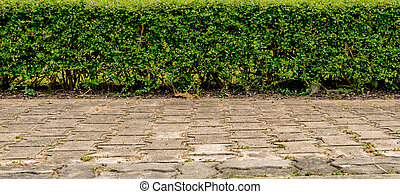 Green hedge fence with concrete block road