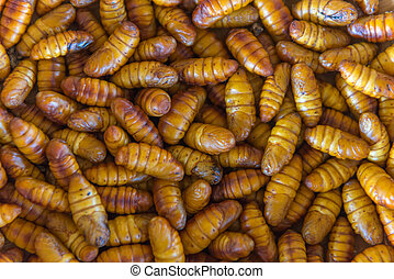 chrysalis silkworm. This is a source of silk thread and silk...
