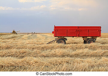 Harvester is working in the field during harvest time