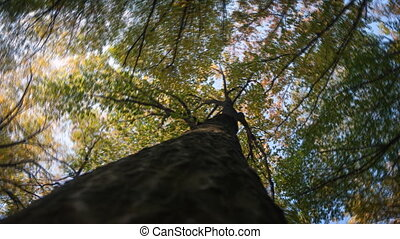 Abstract, Rotating Perspective Shot of Treetop from Below -...