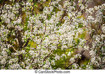 white bloom on trees during spring time