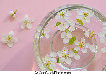 Cherry blossom on pink background