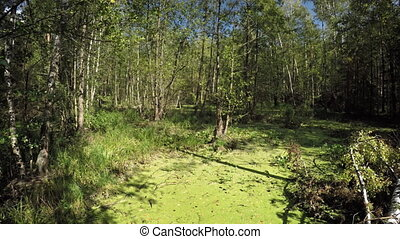 Panning across Swamp and Temperate Forest Wilderness Area...