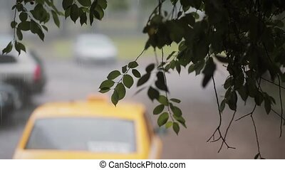 Rain pouring down on branches of a tree. Blurred car passing...