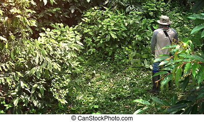 Local Laborer Uses Gas Powered Trimmer to Cut Dense Tropical...