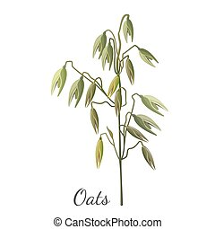 Oats cereals grain realistic hand drawn pattern in realistic...