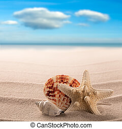 Sea shells and starfish on the beach of a tropical paradise island
