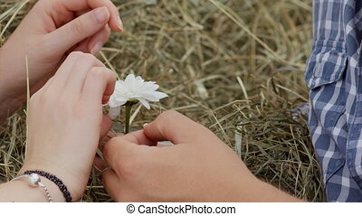 the man and the woman tear off the petals of daisies,...