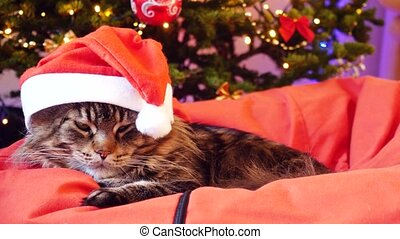 Funny Maine Coon cat as Santa Claus wears christmas cap sits...