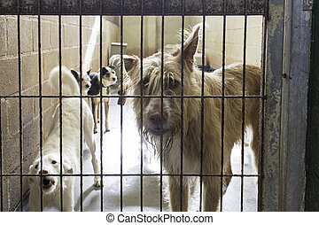 Sad abandoned dogs - Locked kennel dogs abandoned, sadness