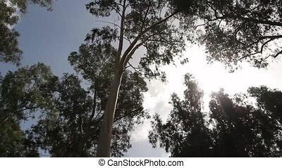 trees rotate - Shot of trees rotate