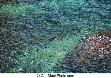 snorkelling view from above - snorkelling swimmer In...