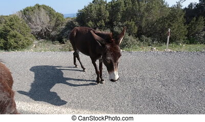 Funny donkey on road. Animals concept