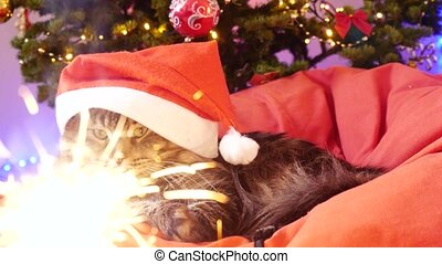 Funny Maine Coon cat as Santa Claus wears christmas cap sits on the pillow at a beautiful new year decorated tree and bengal lights on a foreground. 3840x2160 Two pretty women daughter and mom are relaxing in a spa center, taking selfie with smartphone and drink cup of tea