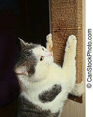 cat exercise claws against scratcher scratch - male tom well...