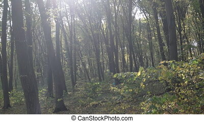 Deciduous, Temperate Forest in Ukraine with Birdsong Sounds...