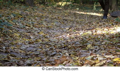 Hiker Walking over Dry Leaves in the Forest with Sound -...