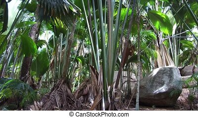 jungle woods with palm trees at africa - travel, flora and...