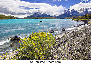 mountains of patagonia at daylight with shore of blue lake and yellow bush