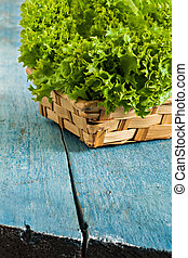 Fresh green salad lola rossa on a blue wooden background.