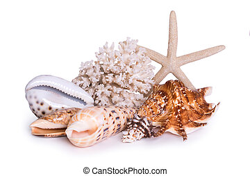 A composition of large sea shells, starfish and corals is...