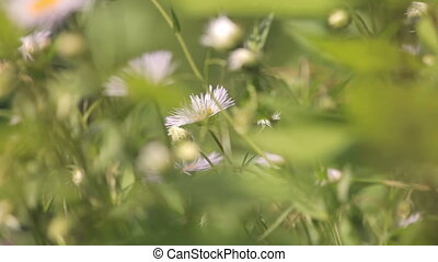 Farm plot of land at the summer cottage. chamomile