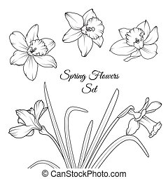 Narcissus spring flowers reusable elements set - Narcissus...