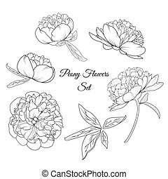 Peony rose flowers reusable elements template set - Peony...