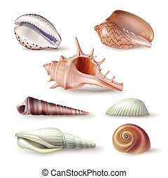Set of vector illustrations seashells of various kinds in...