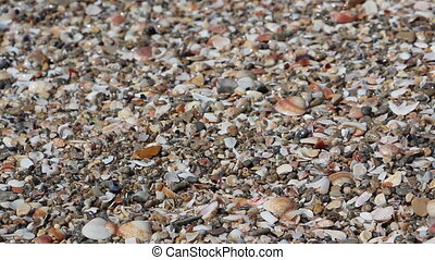 wave over sea shells