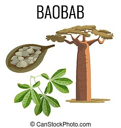 African baobab tree and fruit with seeds color icon emblem...