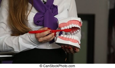 Dentist hygienist showing how to brush teeth properly.