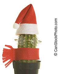 Santa Cactus with Glasses and Scarf - Cactus with Santa...