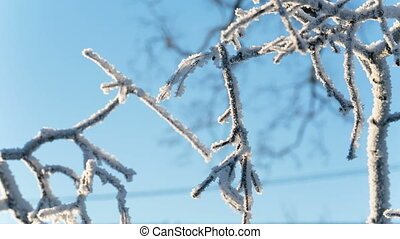 Frozen tree branches close-up. broken branch sways in the...