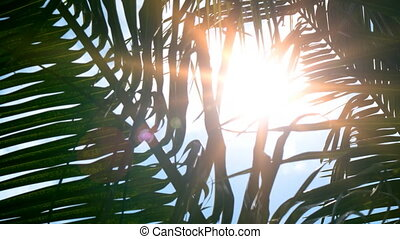 Sunshine through Palm Fronds on a Tropical Paradise - Rays...