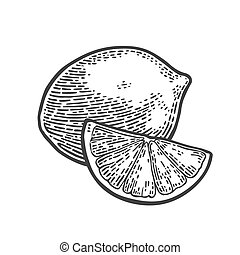 Lime whole and slice. Vintage vector engraving illustration...
