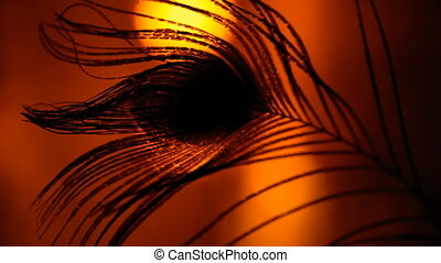 silhouette of a peacock feather in a dark room interior...