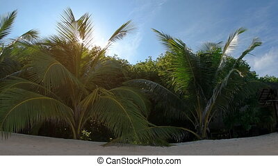 Sunshine Peeks through Palm Fronds over Tropical Beach, with...