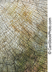 texture of old wood cut