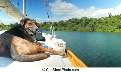 Dog Chilling on the Yacht - Stray dog got a shelter on a...