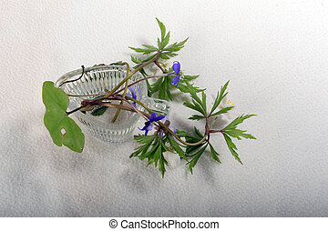 Anemones - Blue and white anemones in tiny glass cup on...