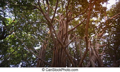 Tropical Trees with Twisted Branches and Hanging Roots in...