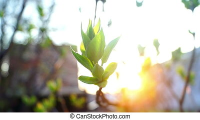 Glowd floar green spring - The growth of young green plants...