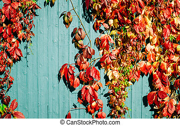 red autumn leaves with wooden background - red and yellow...