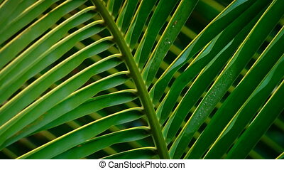 Palm leaf close-up. Bali, Indonesia