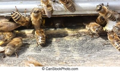 Delivery of pollen to the hive. Collected from the pollen,...