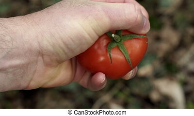 Anonymous Person Crushing Tomato In Hand Closeup - Close up...